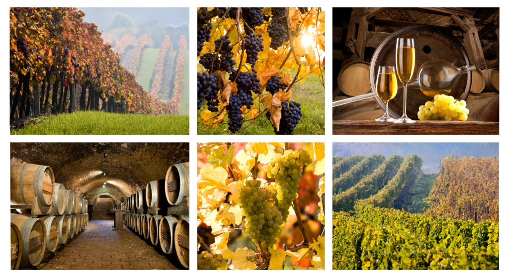 Discount Party Bus Pricing On Wine Tours San Diego